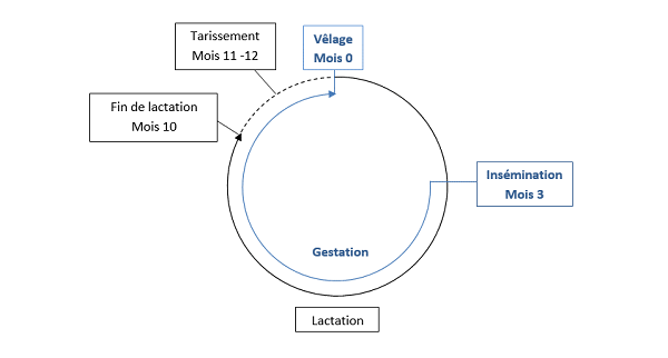 lactation&gestation bio