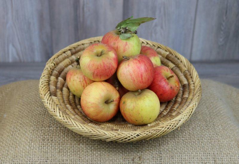 Pommes Reine des reinettes