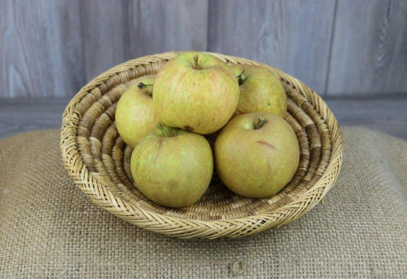 Pommes Reinette de Caux